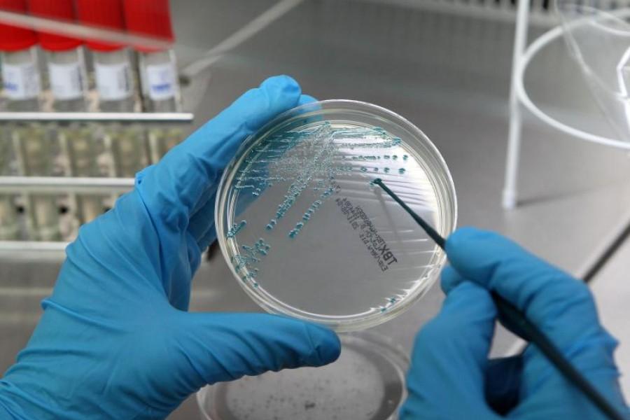 проведение бактериологического посева с кожи