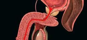 Бак посев спермы на трихомоноз