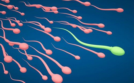 спермаплант морфологии сперматозоидов-ге3
