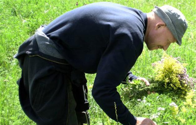 Cамый эффективный рецепт для лечения простатита травами