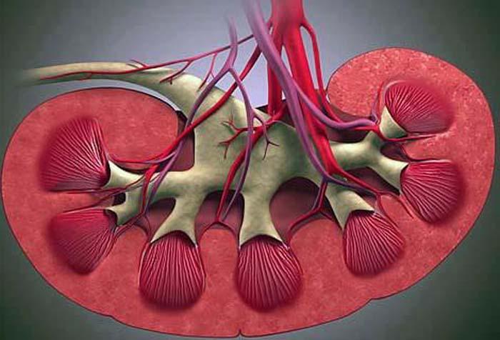Плотность мочи показывает насколько почки качественно фильтруют кровь и превращают ее в мочу.