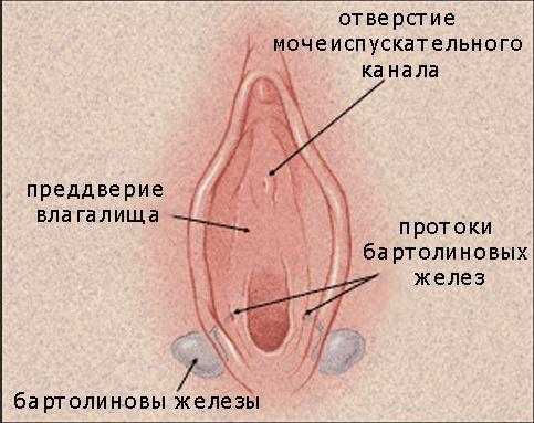 kista-vlagalisha-zhzhenie
