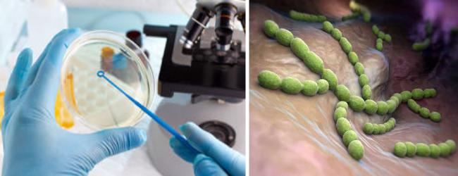 возбудители дерматологических и венерологических болезней