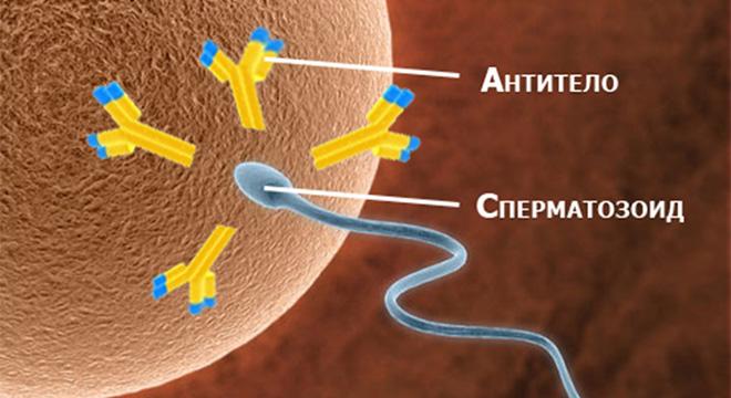 osnovnie-komponenti-spermi