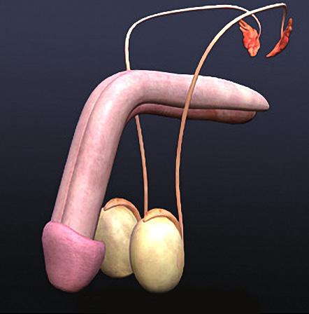 strampon-i-sperma